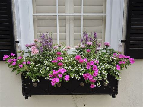 soil for window boxes how to arrange a window box