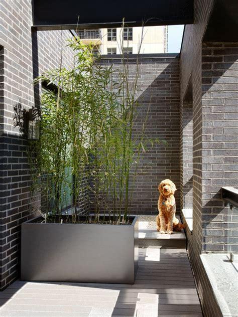 Beau Planter Des Bambous Dans Son Jardin #7: Planter-des-bambous-planter-du-bambou-en-pot.jpg