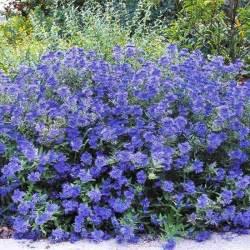 k w greenery inc 187 deciduous shrubs