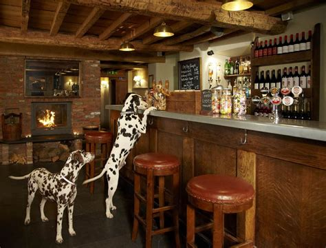 top dog bar nj 7 canine country covers