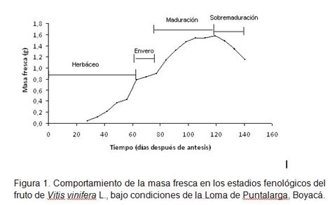 determination of phenological fruit stages of vitis
