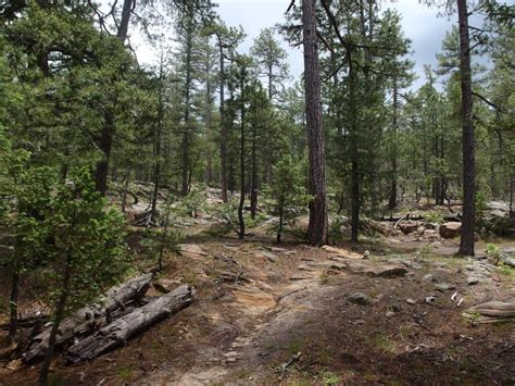 Cabin Loop Trail Az by Cabin Loop Fred Haught Trail Jacob Emerick S