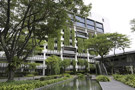 bca singapore the green crab urban tropical ecology in singapore