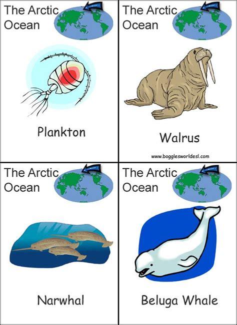 printable animal habitat cards continent flashcards printables buscar con google