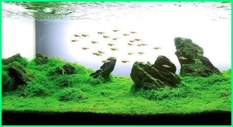 aquascape seni menata akuarium dunia fauna hewan