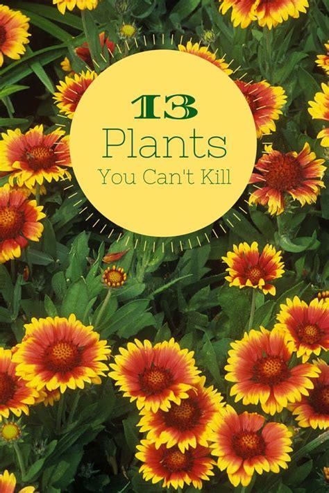 garden flowering plants 25 best ideas about flower plants on
