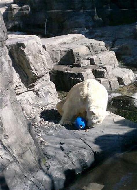 Www Zoo Section by Polar
