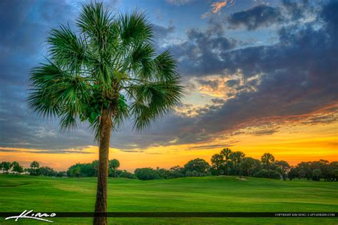 golf tree palm tree at golf course palm florida