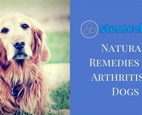remedies for arthritis in dogs arthritis archives stem cell vet uk