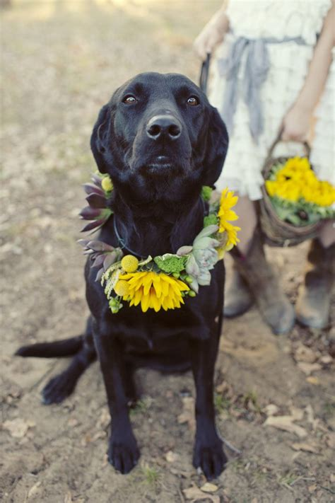 images  weddings dogs  pinterest