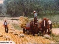 91 best amish mennonite images on amish