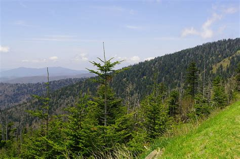 Which Biome Is Logging Hardwood Trees - file clingmans dome spruce fir tn1 jpg wikimedia commons