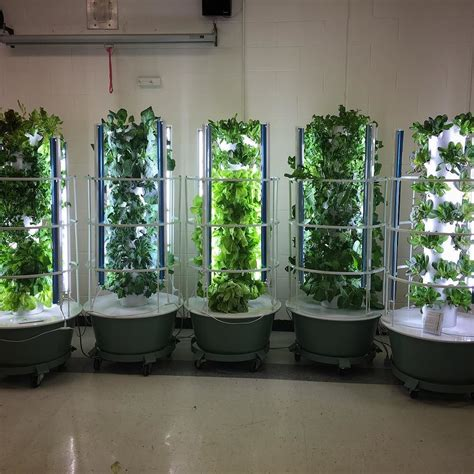 four hardest vegetables to grow from seed buy transplants vertical farming 101 grow your own fruits vegetables