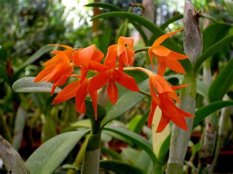 orchid botanical garden lankester orchid botanical gardens