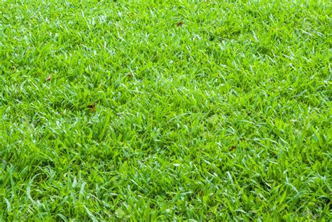 couch grass control common couch grass weeds grass weeds information and