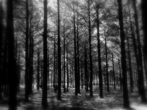 imagenes de oscuros records colecci 243 n bosque oscuro taringa