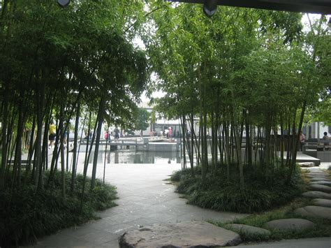 backyard bamboo garden 07 a bamboo garden