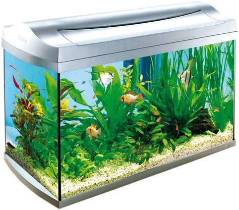 ghiaia per acquario acqua dolce il fondale e le rocce per l acquario d acqua dolce acquario