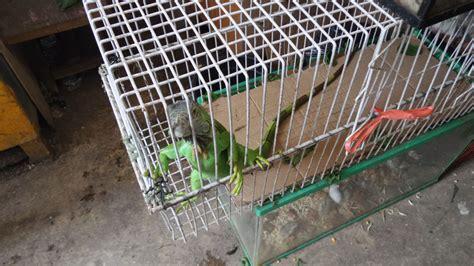 Anakan Arwana Di Bandung eksplorasyik pasar burung sukahaji bandung penjaja kata