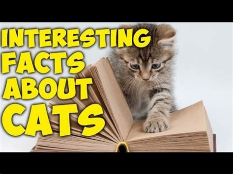 15 interesting facts about cats youtube