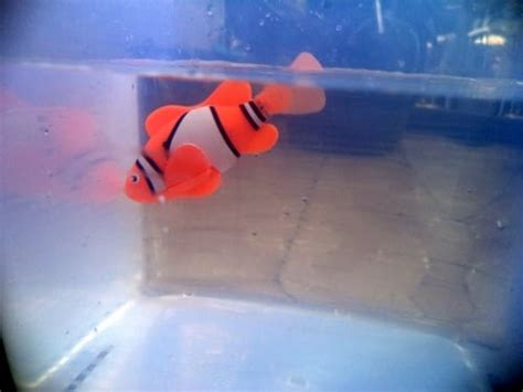 Robot Ikan Mainan Ikan U294 robot ikan darmawan