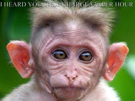 Monkey Face Meme - massive ears monkey quickmeme