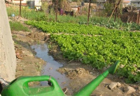 Best Way To Water A Vegetable Garden Best Way To Water A Vegetable Garden
