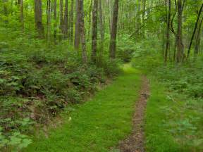 St Forest File Standing State Forest Tn1 Jpg