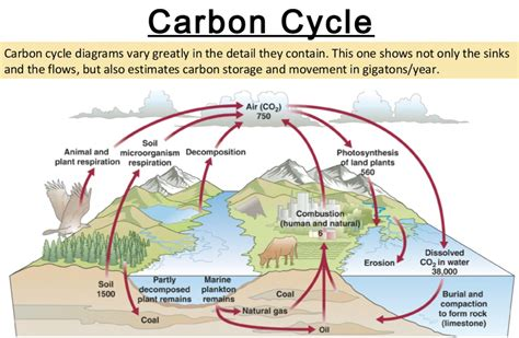 What is the carbon cycle diagram process definition kotaksurat water cycle definition and diagram best of worksheet thecheapjerseys Choice Image