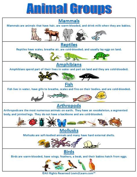 super subjects super science life science animal groups animal groups chart school