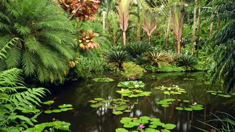17 best images about plants on gardens tropical tropical garden wallpaper 38673