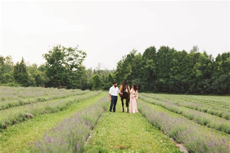 milton tree farm lavender farm engagement shoot in milton toronto wedding