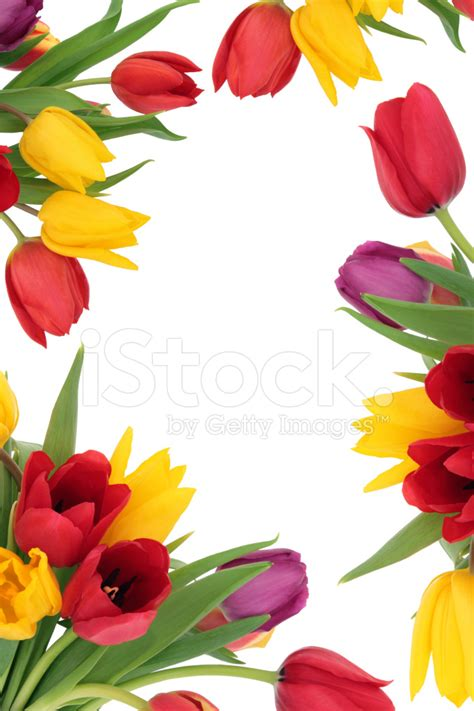 Winter Flowers by Tulip Flower Border Stock Photos Freeimages Com