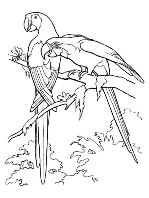 Rainforest Animals Coloring Pages Print » Home Design 2017