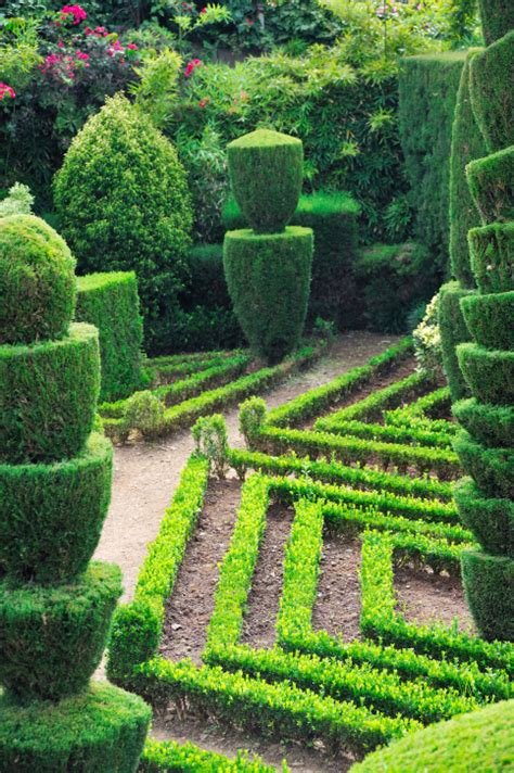 stunning topiary trees gardens plants   shapes