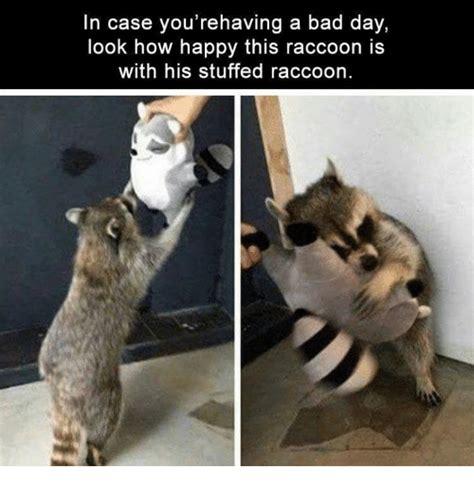 Racoon Meme - 25 best memes about raccoons raccoons memes