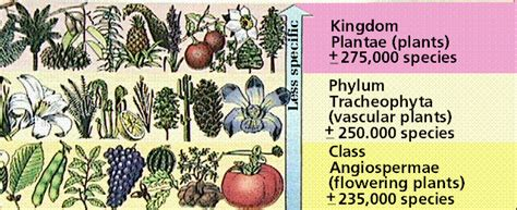 fruit definition biology plant taxonomy the edible plants in