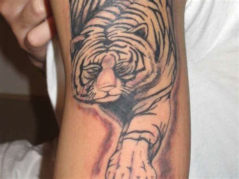 white tiger tattoo meaning white tiger meaning for best design ideas