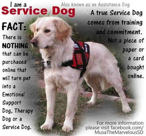 therapy dogs for anxiety exle service certification for anxietyalexaprintablecertificates