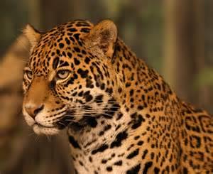 We Are Jaguars C Middle School