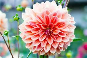 homelife 10 best summer flowers