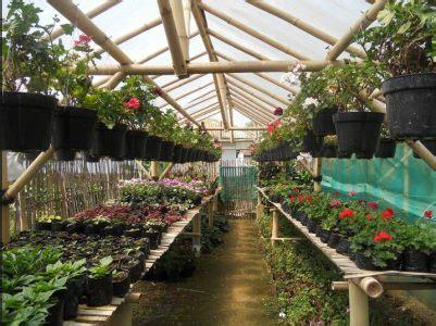 tanaman hortikultura pengertian manfaat budidaya