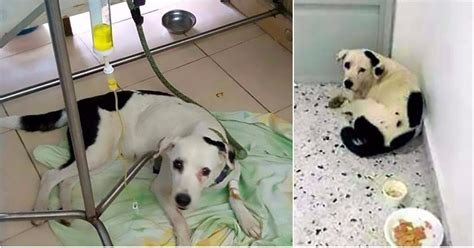 the abandoned puppy series 1 dies of broken after owner dumped at an