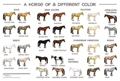 pictures of horses to color quot colors poster quot photographic print by
