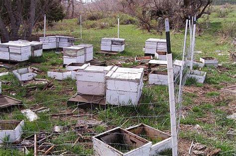 backyard beekeepers backyard bee how to video on protecting the hive