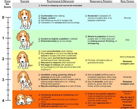 painkiller for dogs 1
