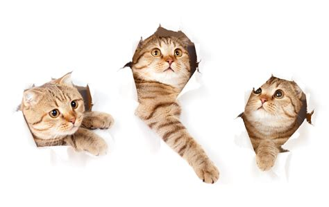 cat wallpaper note 3 photo kitty cat cats three 3 glance animals