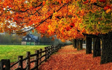 google images of fall autumn live wallpaper android apps on google play