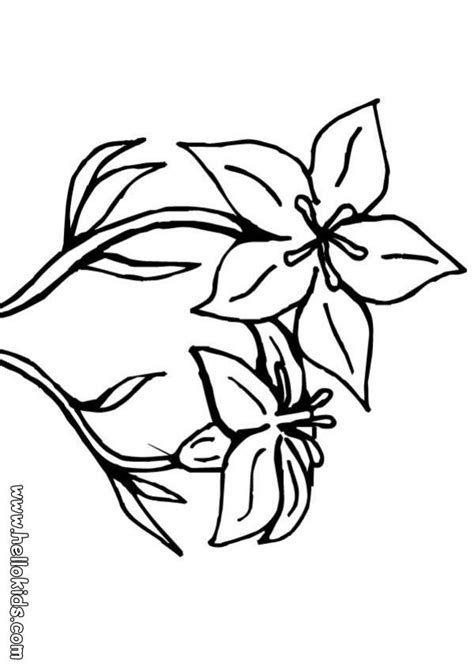 coloring pictures of lily flowers lily flower coloring pages flower coloring page