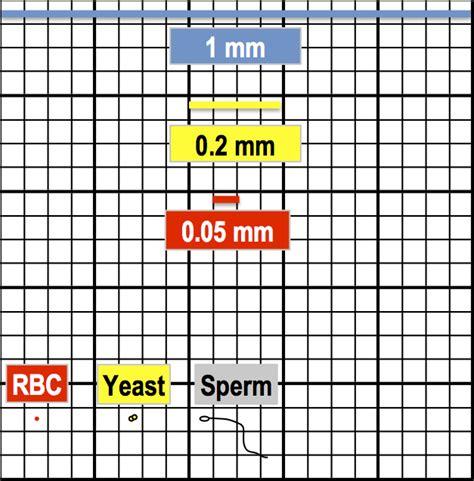 25 Square Meter by Hemocytometer Square Size Hemocytometer